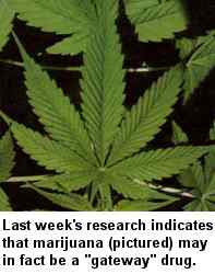 Last week's research indicates that marijuana may in fact be a gateway drug